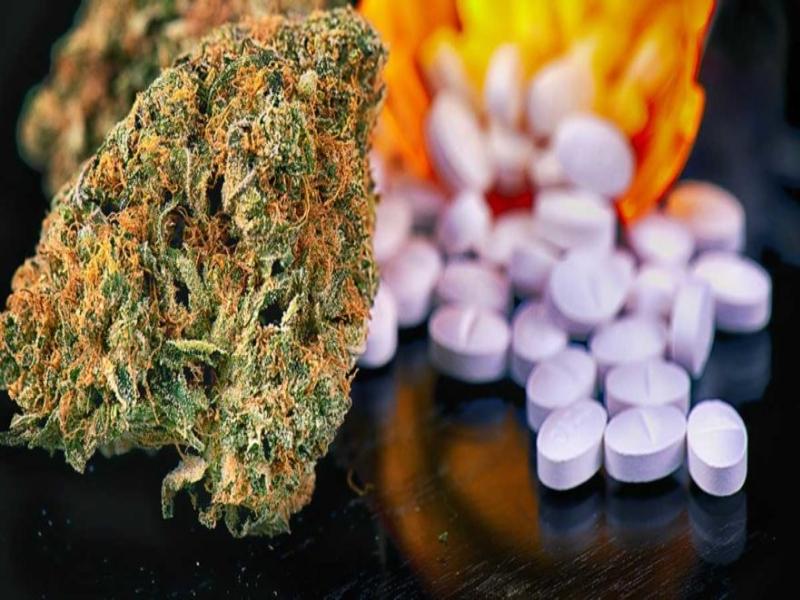 marijuana and pharma industry