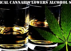 Study Shows Medical Cannabis Lowers Alcohol Sales