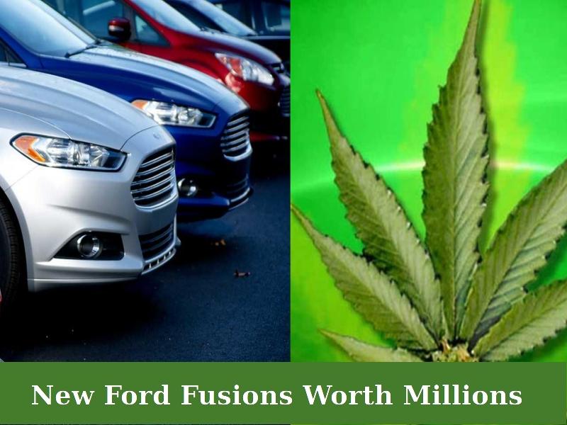 Marijuana in Ford Fusion