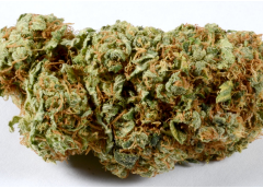 High Quality and Healthy Cannabis Products Available Online