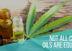 Not all CBD Oils are Equal: Understanding the Differences